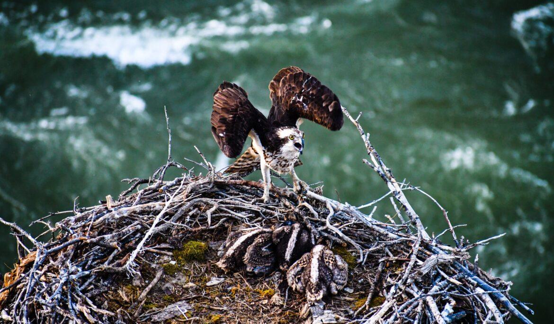 Co nového se děje u orlů? Cecilka má jedno mládě!